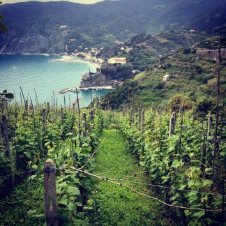vineyards tumbling into seaside in Cinque Terre