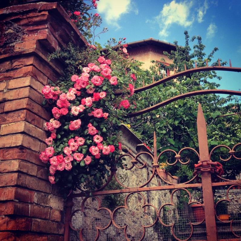 florals in Perugia
