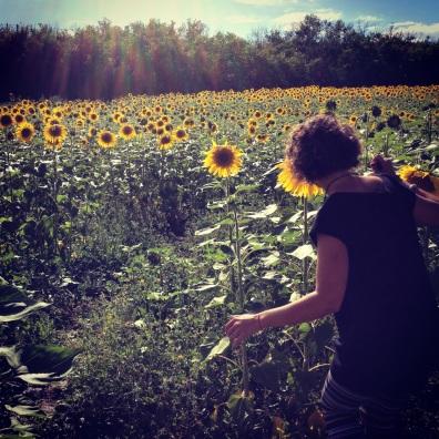 sunflower season, Tuscany