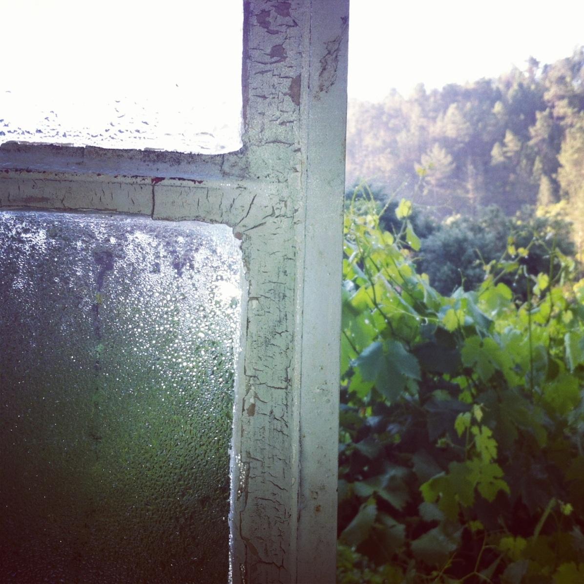 window views onto vineyards